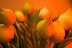Lotus Warmth